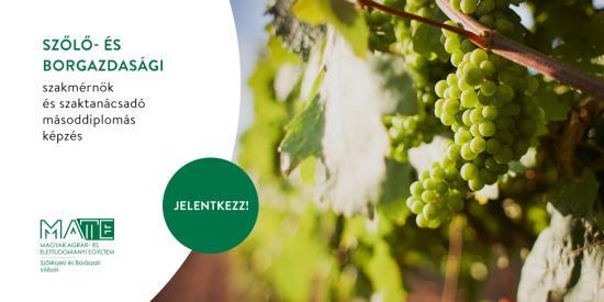 Szőlő- és borgazdasági szakmérnök és szaktanácsadó képzés a Magyar Agrár-és Élettudományi Egyetem Szőlészeti és Borászati Intézetében